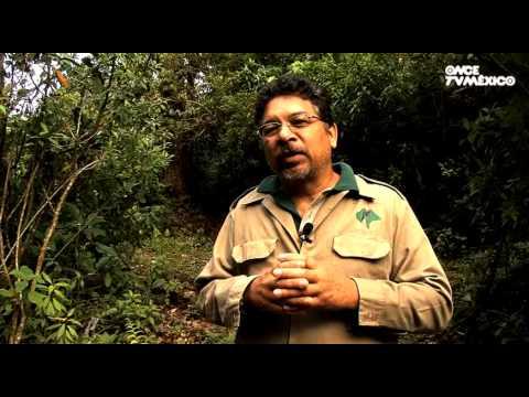 El libro rojo, Especies amenazadas - Tapir, el jardinero de la selva (15/01/2013)