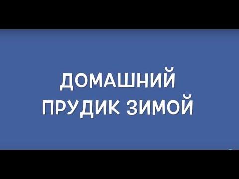 ДОМАШНИЙ ПРУДИК ЗИМОЙ.