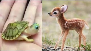 Cute baby animals Videos Compilation cute moment of the animals - Cutest Animals 3