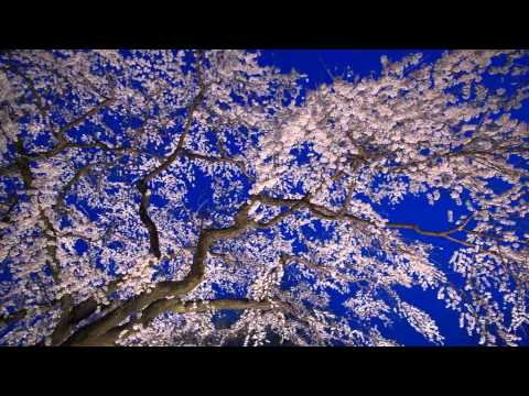 Sakura Sakura (for piano) arr. Yoshinori Kaketa video by Antonio Enzo Stangherlin.