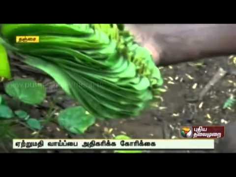 Tanjore farmers request to cancel the ban to export betel leaves to European countries
