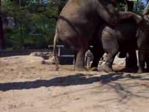 elefanti allo zoo di berlino
