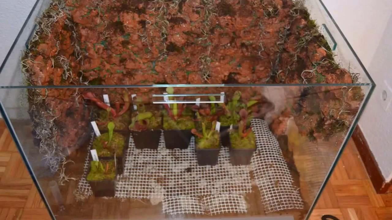 Como hacer un fondo para nuestro terrario y montarlo youtube - Como construir un terrario ...