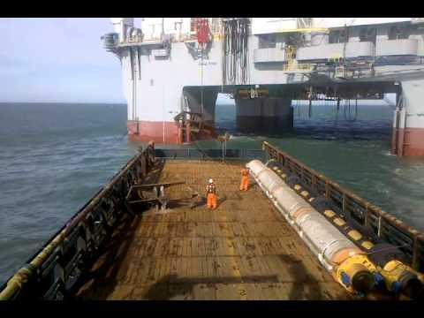 Sea Life Brazil Offshore