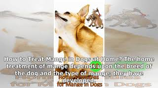 13 Home Remedies for Mange in Dogs