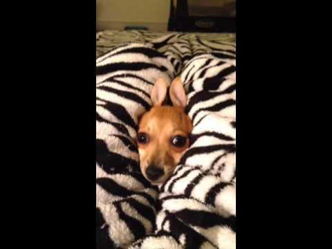 Crazy puppy!