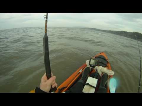 Kayak fishing for Ray - Bristol Channel