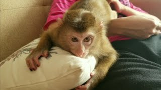 Monkey Baby Nui | Nui cute with relatives