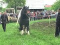 Caii lui Soricelul Gilau 2014 Tractiune