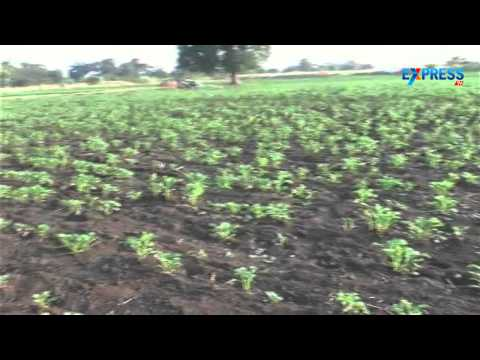 Commercial crop damage by forest animals at Adilabad