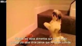 Cachorro faz oração antes de comer
