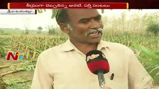 Cyclone Titli Leaves Widespread Damage to Banana Crops | NTV
