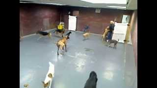 Doggie Day Care Poo Fest