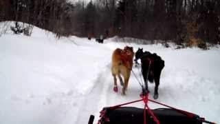 Dog sledding - view from the sled