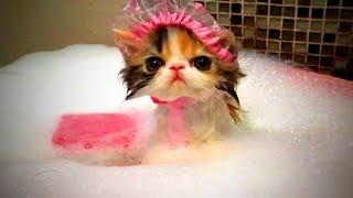 Funny Cats 😻 Funny Cute Cats Fails (Full) [Funny Pets]