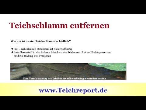 Teichschlamm Entfernen, Phosphate Binden - Video: So Geht Ihr Gartenteich Topfit In Die Wintersaison