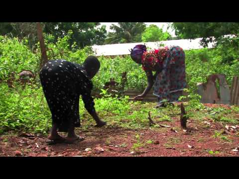 Young girl working with her grandma in the garden in Ghana.
