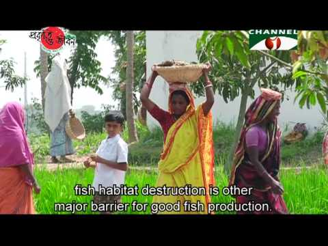 Nature and Life - Episode 81 (Fishery Resources of Bangladesh)
