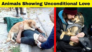 Amazing Photos Shows Unconditional Love Animals Are Happy To Give