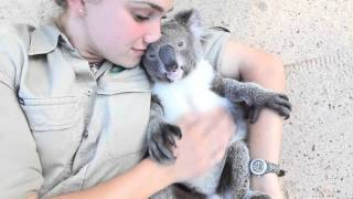 Koala loves cuddling - Super cute