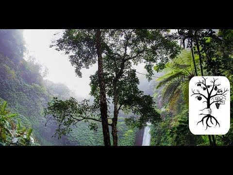 Terra Preta - der fruchtbarste Boden der Welt