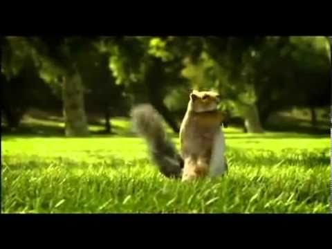 Kit Kat Advert ( Squirrel ) 00 00 24-00 00 33.avi video