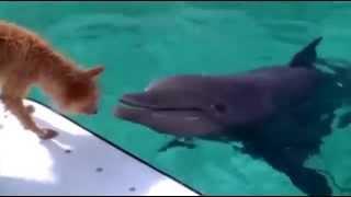 Dolphin & Dog (MIR'S MOVIES Cut)