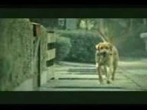 Funny Car Advert L Dog Sex! video