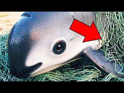 8 Tiere - Die Bald Aussterben Könnten!