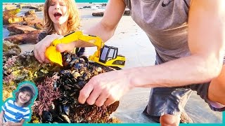 Construction Trucks For Children | Excavator Harvesting Wild Muscles