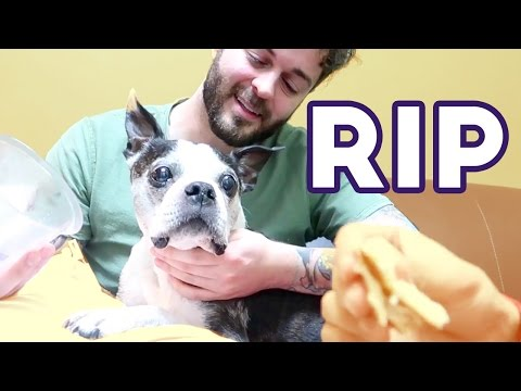 SAYING GOODBYE TO MY BEST FRIEND: A TRIBUTE TO BUSTER BEANS
