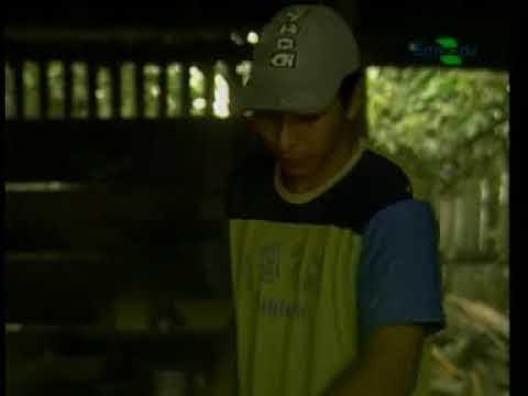 Teca : sistema de cultivo e mercado : parte 2 - Dia de Campo na TV