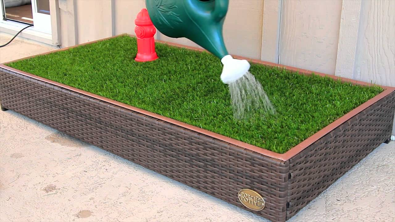Indoor Grass For Dogs Uk