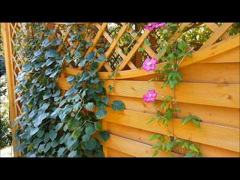 Ogród Przydomowy - Piękny Ogród W Lublinie #3