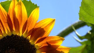 Morning Relaxing Music - Soothing Relaxing Piano Music, Positive Background Music (Isabella)