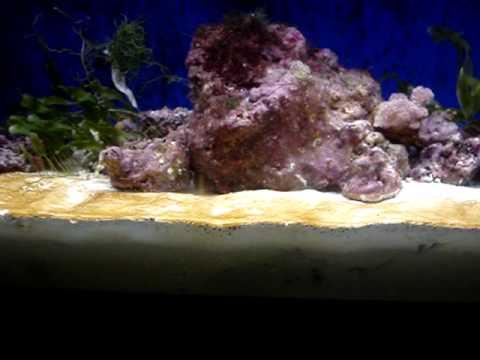 Marine Aquarium Deep Sand Beds Pt 1 Of 2 Youtube