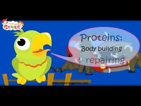 Food Pyramid - Video in Hindi (Nutrition Table ) खाद्य पिरामिड  for Kids