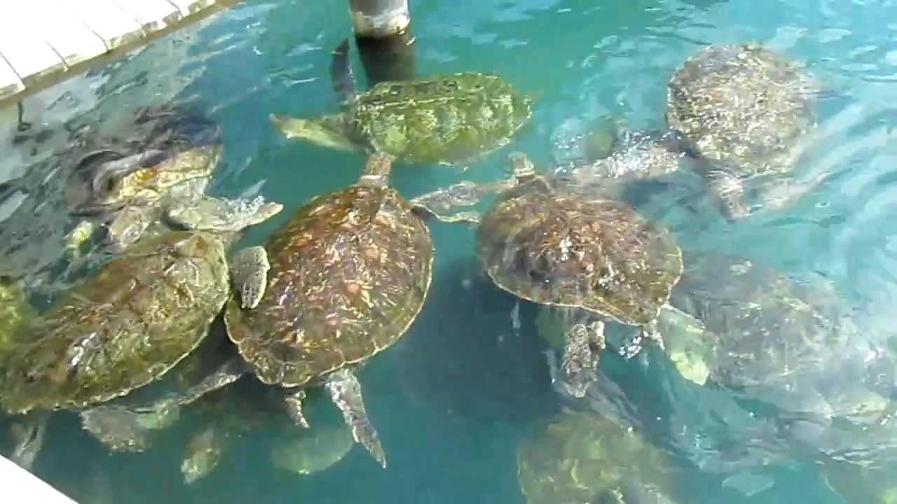 West Bay Grand Cayman Islands