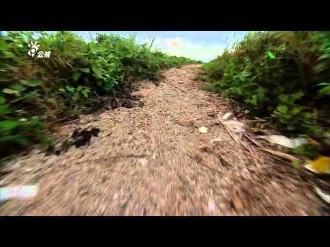 我們的島─第725集 紅蟹消失記