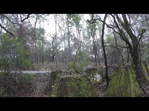 Possible Water Tower Foundation in Citrus Wildlife Management Area