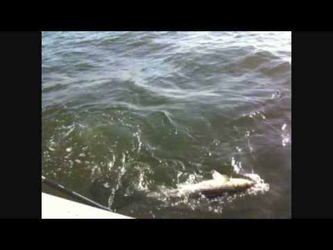 Wetdreams Sport Fishing | Raritan Bay Stripers