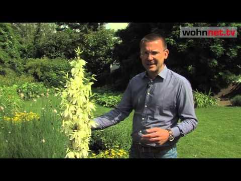 Welche Pflanzen Eignen Sich Für Einen Platz An Der Sonne?