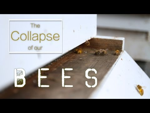 P's Bees: The Collapse of our Honeybees  |  Fresh P