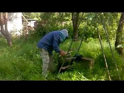 как ловят пчелы в лесу