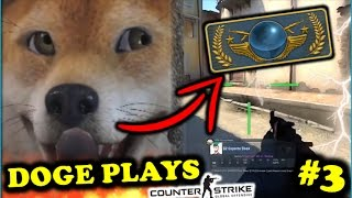 WHEN DOGE PLAYS CSGO #3! BEST OF DOG MOMENTS (Stream, Fails, Rage & Funny Moments)