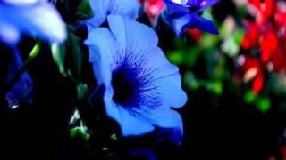 Watch Sheila Nicholls Natural Law video