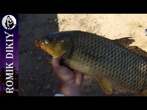 выя рыбалка