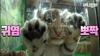 Tigers, Stay Forever Young Plz.. Agree?
