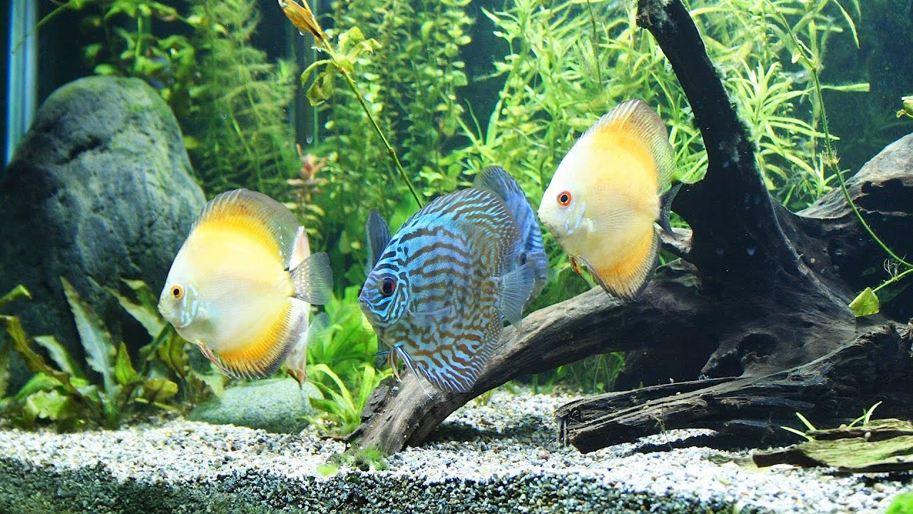 how to take care of fish tank