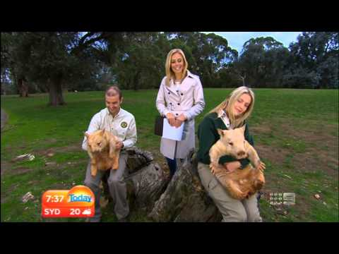 Channel 9 - Today Show - Cleland Wildlife Park - 6th May, 2013